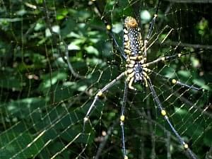Agumbe is home to a vast variety of flora and fauna, who thrive in the tropical rainforest.