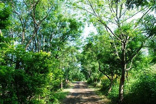 Today, that boulder-ridden patch is The Gandhians Farm, home to over 1 lakh trees