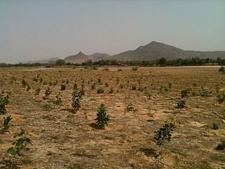 The wastelands in Bihar which are being used for generating biofuel by Green Leaf Energy