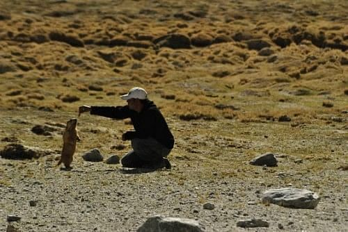 Danny and the Marmot – an epic story.
