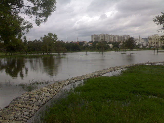 It took a few years to get the lake rejuvenated.