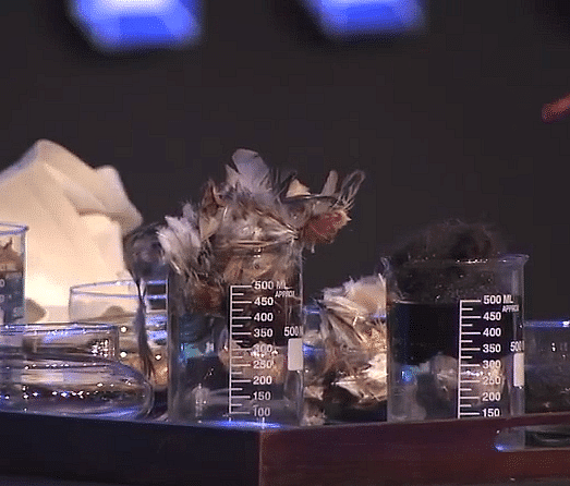 Birth feathers are yet another ingredient that can be used to clear oil influence from water.