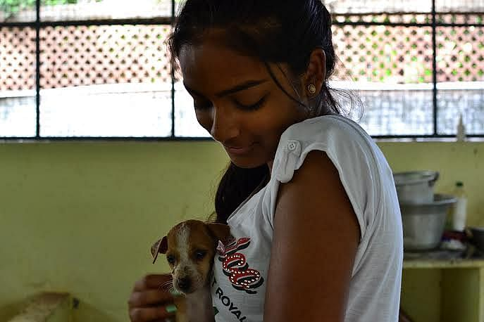 There are thousands of street animals who are seeking love and affection.