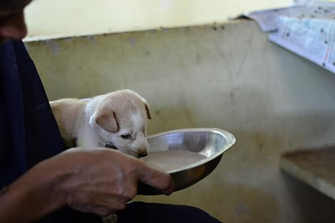 The organization follows up after the animal has been adopted to make sure they are not abused.