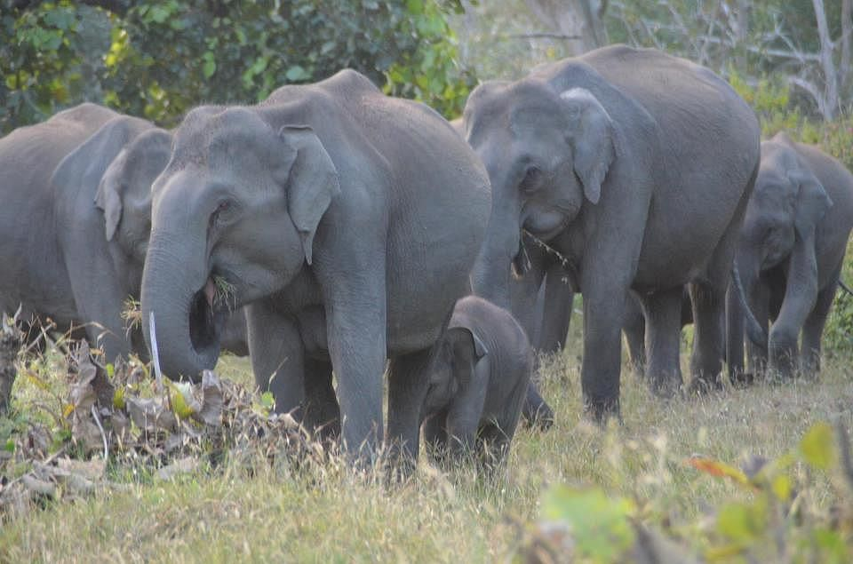 The idea is to provided safe habitat to both elephants and humans.