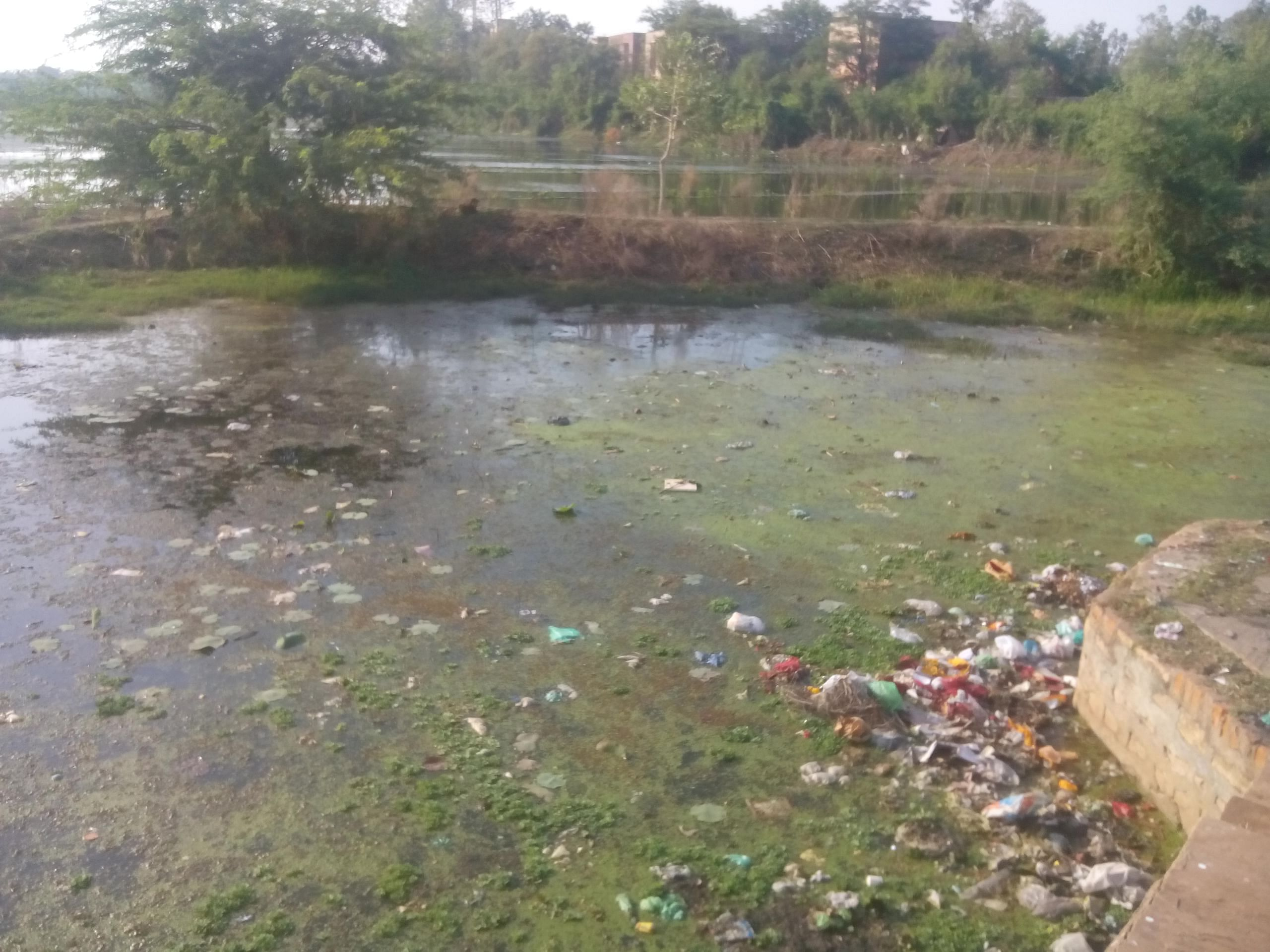 Another dilapidated lake in Shivpuri