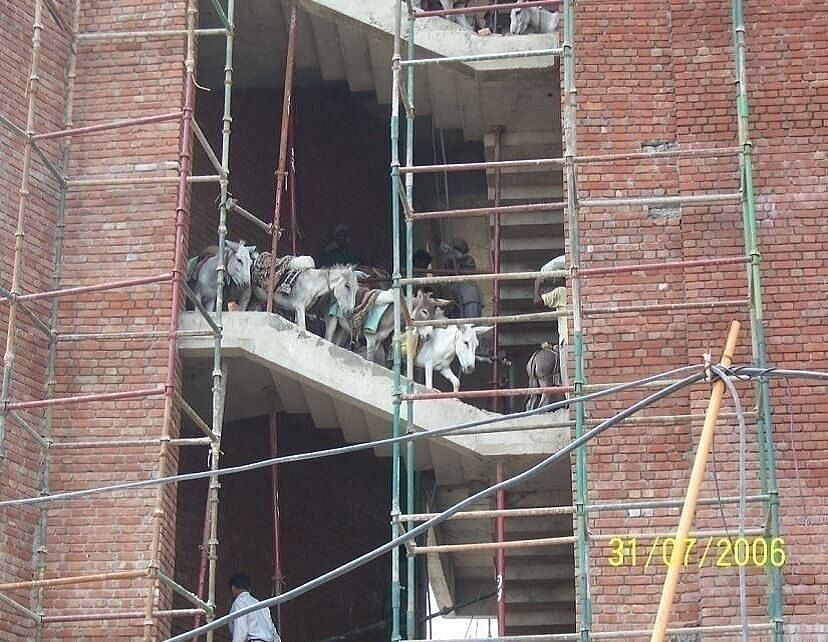 Donkeys helps construct buildings too -but don't get any credit for it