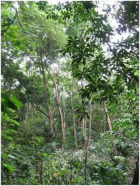 A view of the mini-forest (Photo: Dr. T.V. Ramachandra)