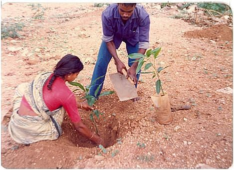 The terrain on which the mini-forest was raised. (Photo: Dr. T. V. Ramachandra)