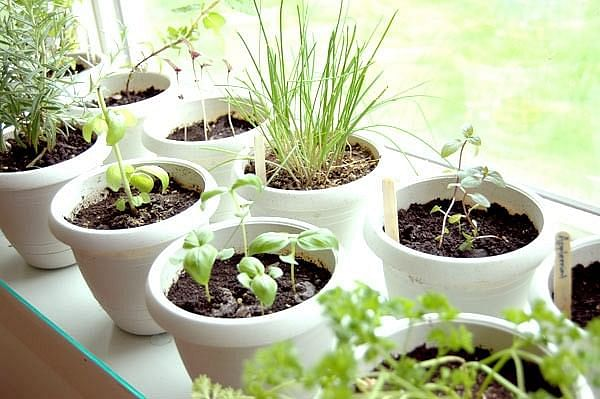 Blog-Indoor-Herb-Garden