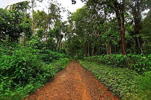 coorg_coffee_plantation_zps716ae39a